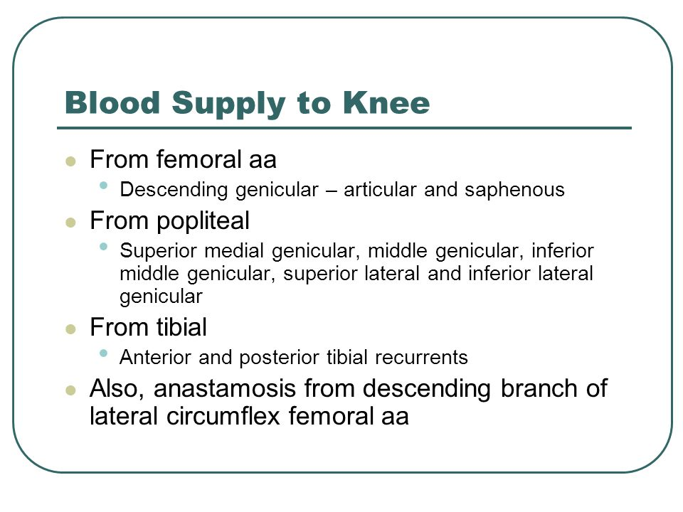 Blood Supply to Knee From femoral aa From popliteal From tibial