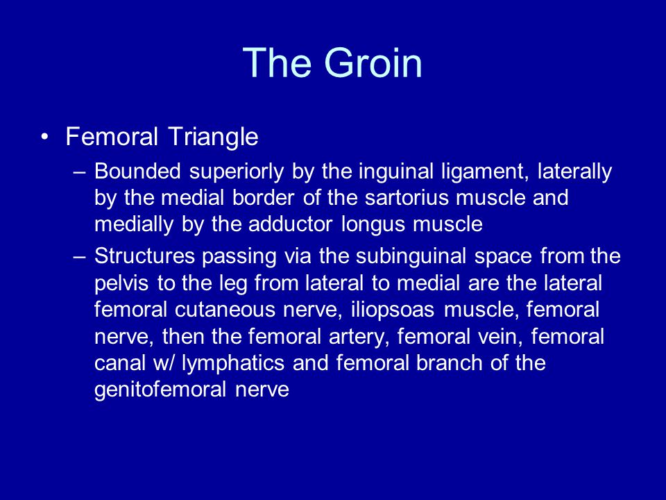 The Groin Femoral Triangle