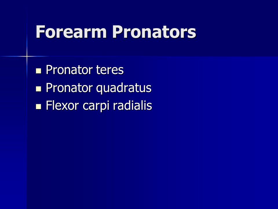 Forearm Pronators Pronator teres Pronator quadratus