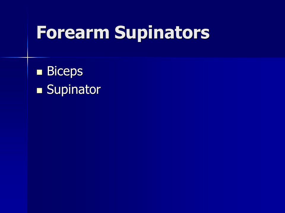 Forearm Supinators Biceps Supinator