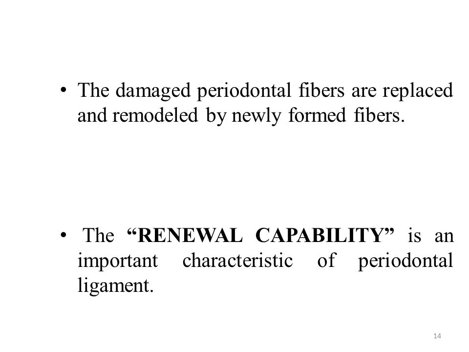 The damaged periodontal fibers are replaced and remodeled by newly formed fibers.
