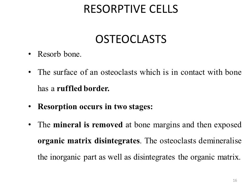 RESORPTIVE CELLS OSTEOCLASTS