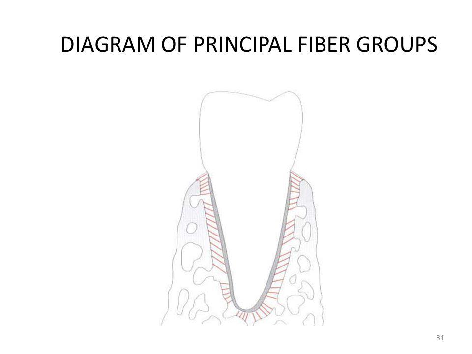 DIAGRAM OF PRINCIPAL FIBER GROUPS