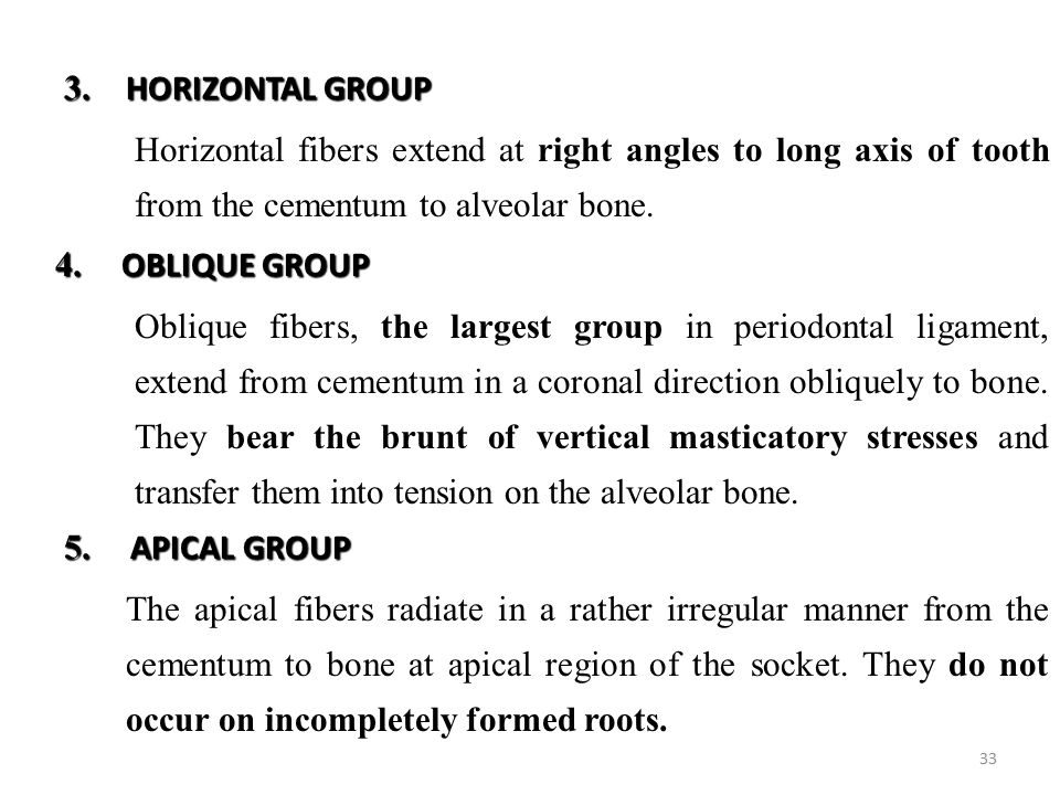 3. HORIZONTAL GROUP Horizontal fibers extend at right angles to long axis of tooth from the cementum to alveolar bone.
