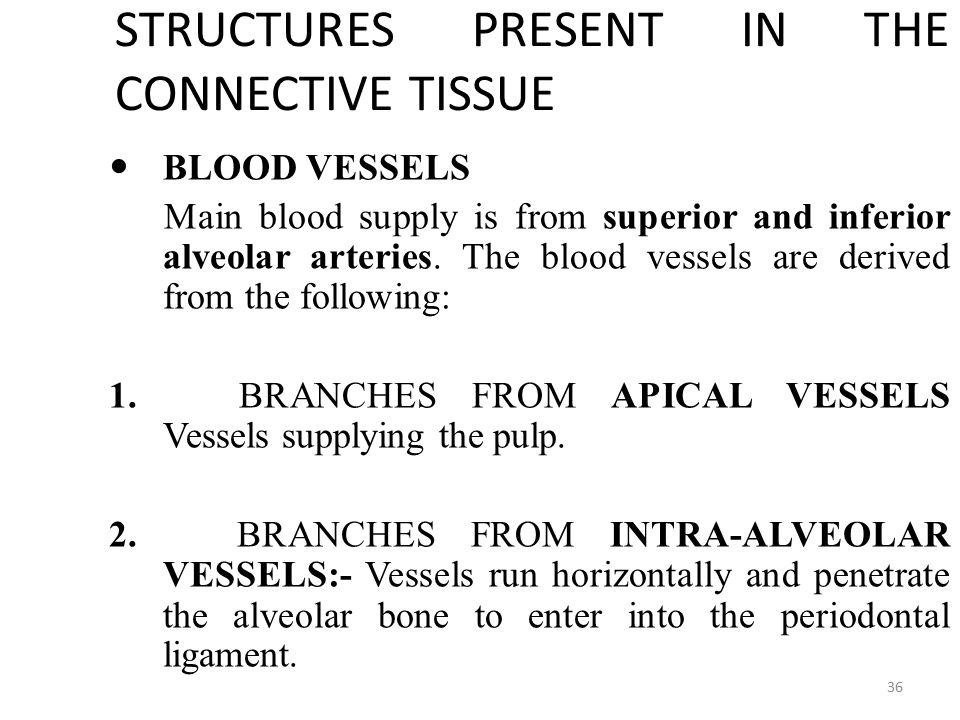 STRUCTURES PRESENT IN THE CONNECTIVE TISSUE