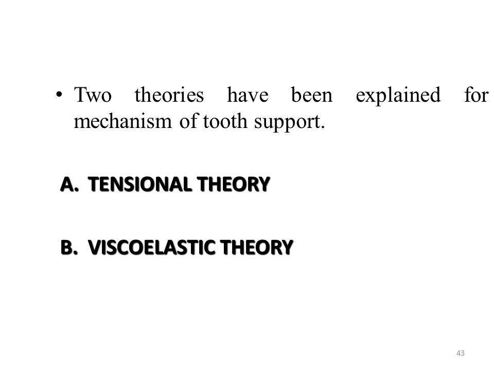 Two theories have been explained for mechanism of tooth support.