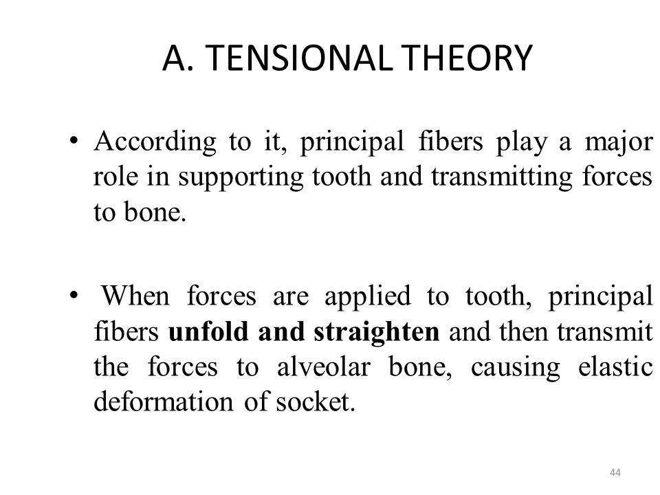 A. TENSIONAL THEORY According to it, principal fibers play a major role in supporting tooth and transmitting forces to bone.