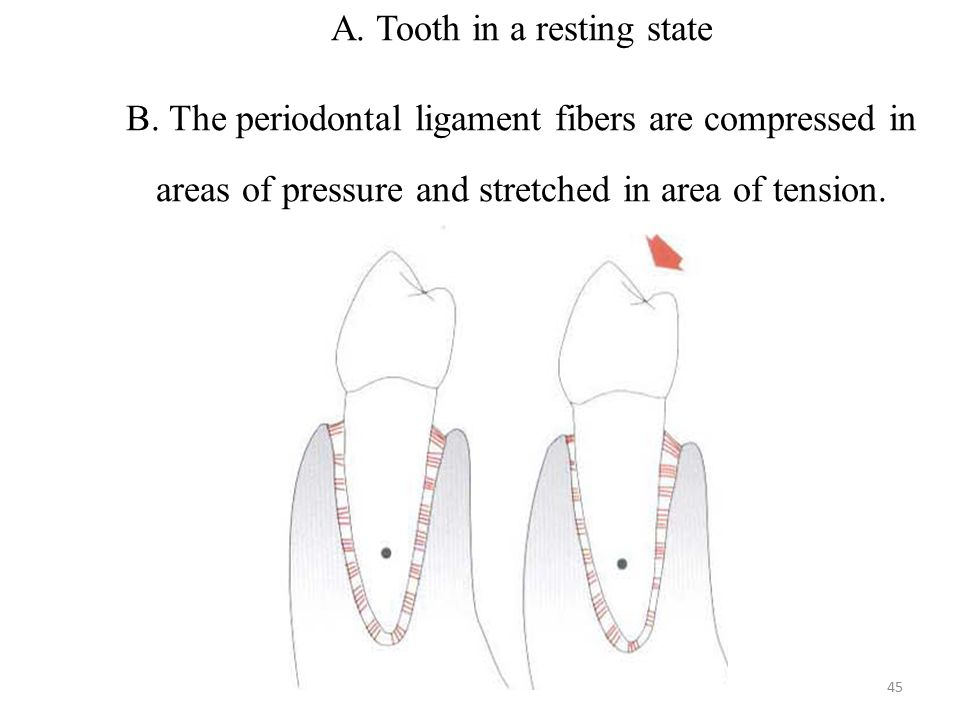 A. Tooth in a resting state B