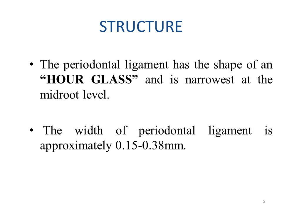 STRUCTURE The periodontal ligament has the shape of an HOUR GLASS and is narrowest at the midroot level.