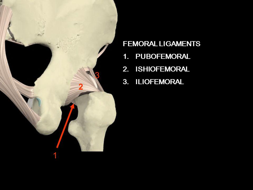 3 2 1 FEMORAL LIGAMENTS PUBOFEMORAL ISHIOFEMORAL ILIOFEMORAL