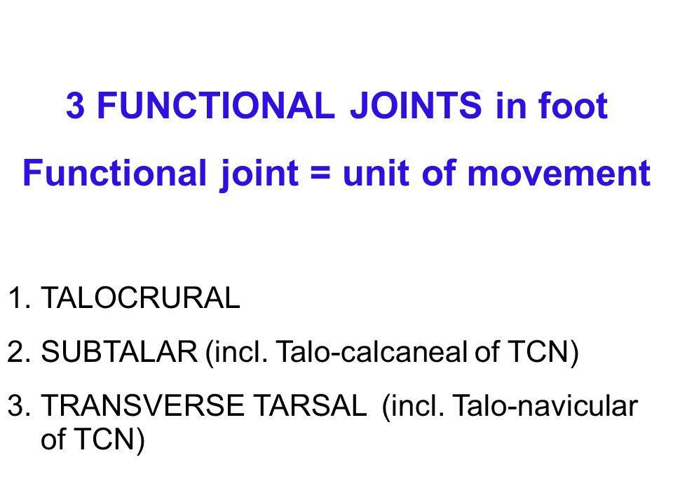 Functional joint = unit of movement
