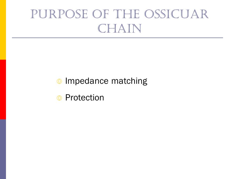 Purpose of the ossicuar chain