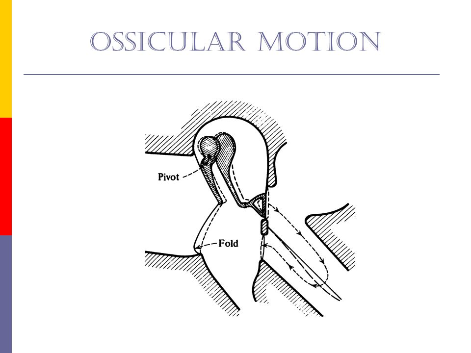 Ossicular motion Fig 1-5: schemata of ossicular motion.