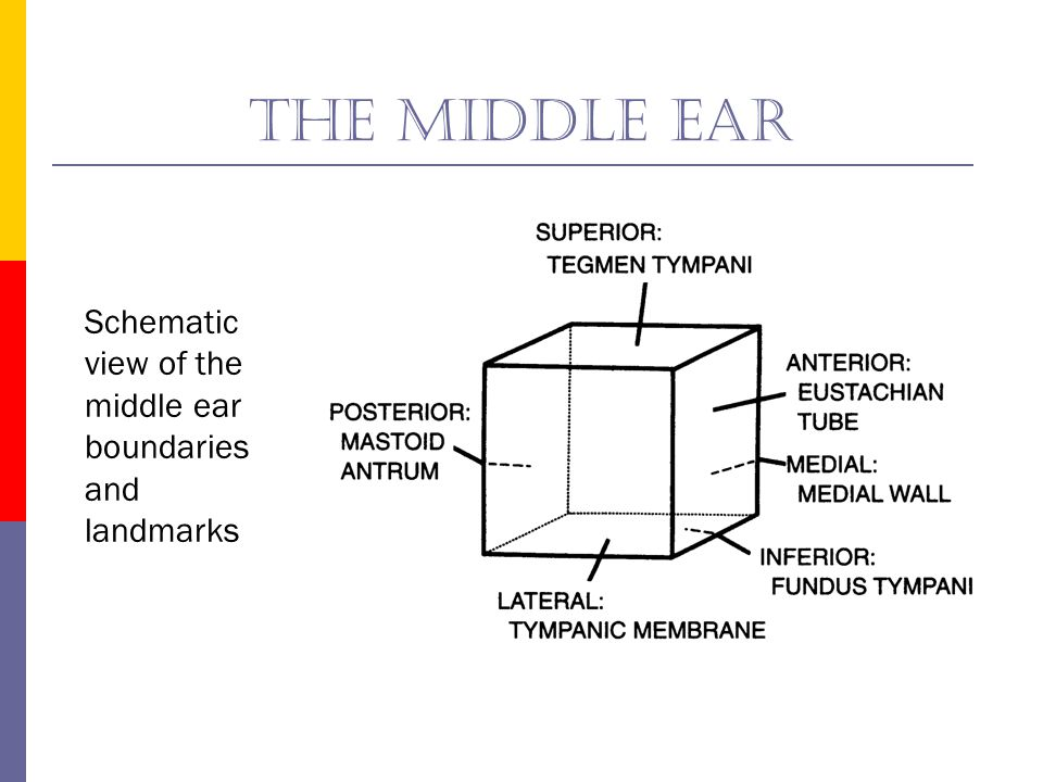 The middle ear Schematic view of the middle ear boundaries and landmarks.