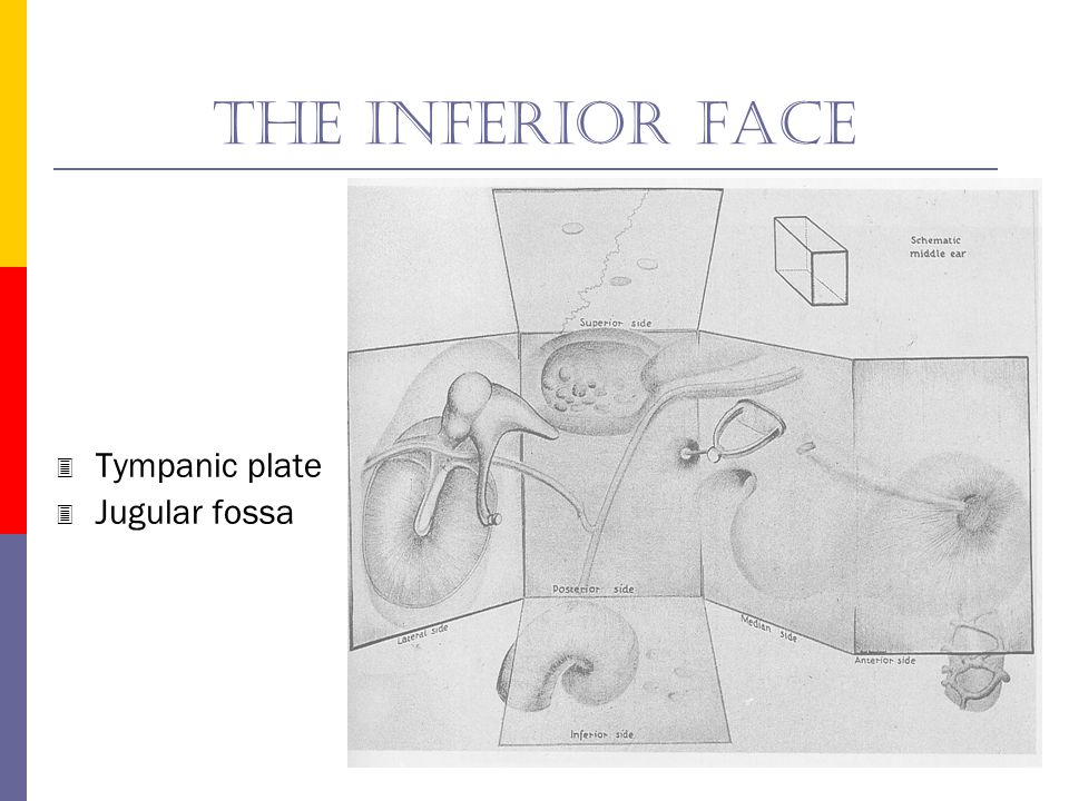 The inferior face Tympanic plate Jugular fossa