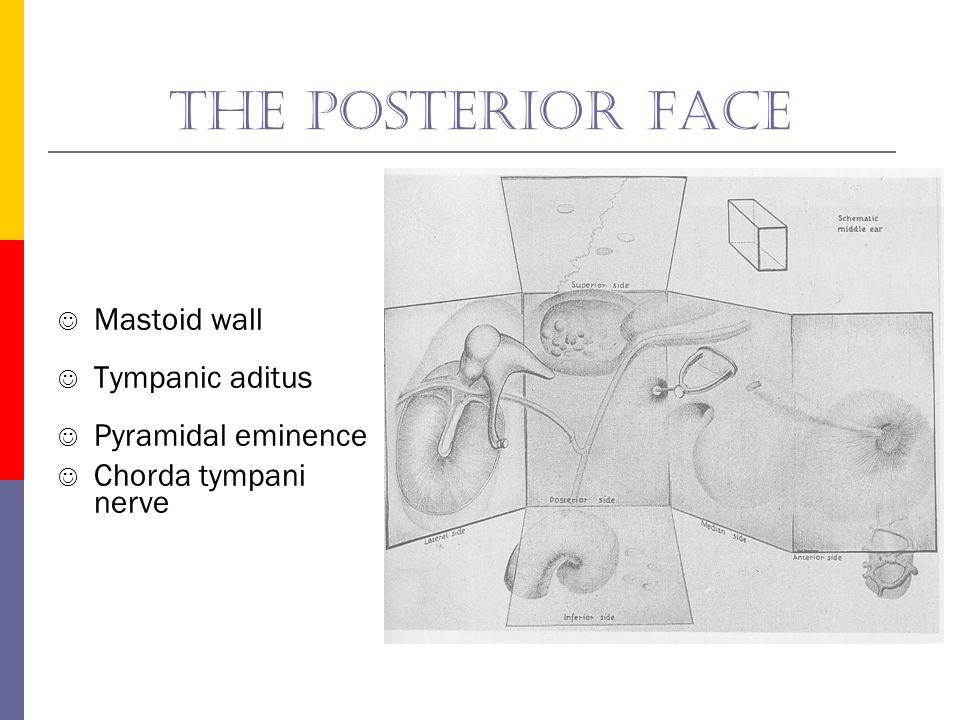 The posterior face Mastoid wall Tympanic aditus Pyramidal eminence