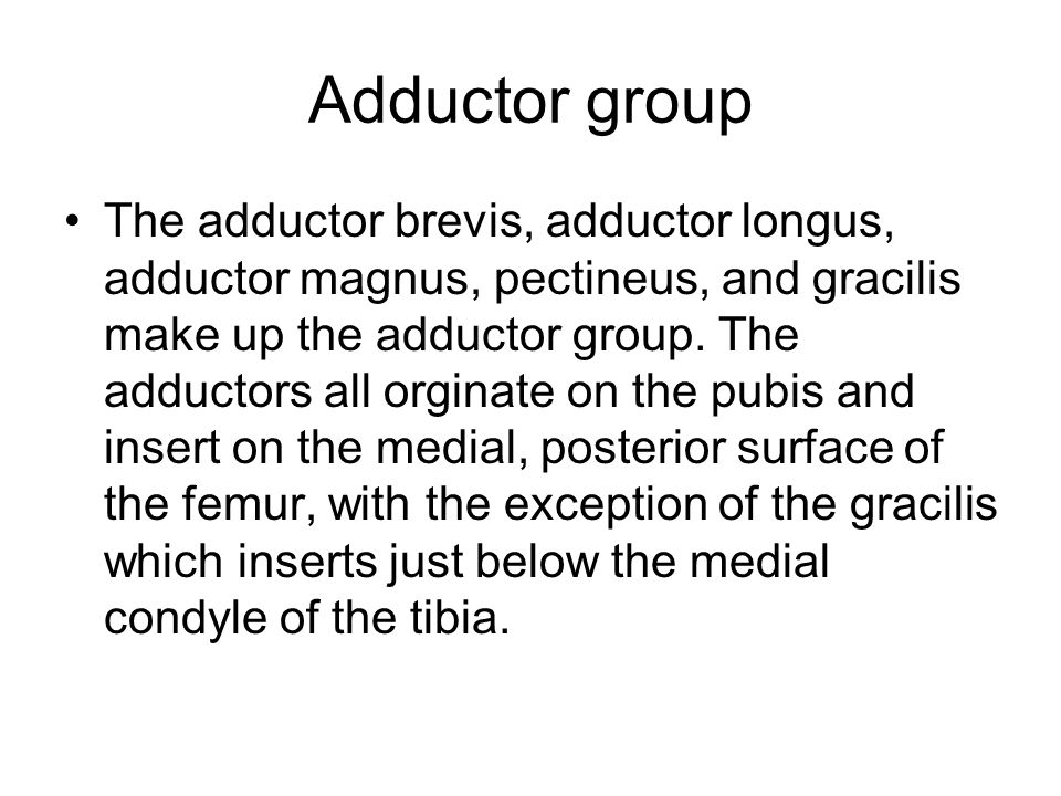 Adductor group