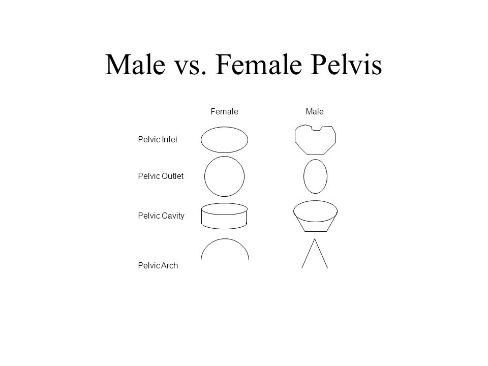 Male vs. Female Pelvis Male Female Pelvic Inlet Pelvic Outlet