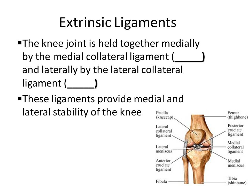 Extrinsic Ligaments