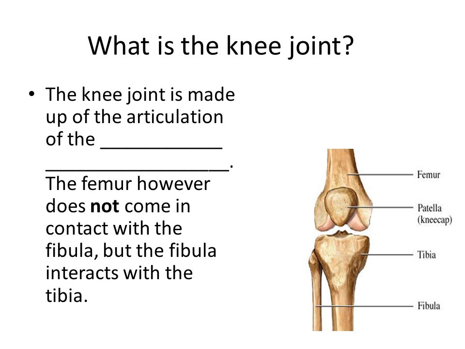 What is the knee joint