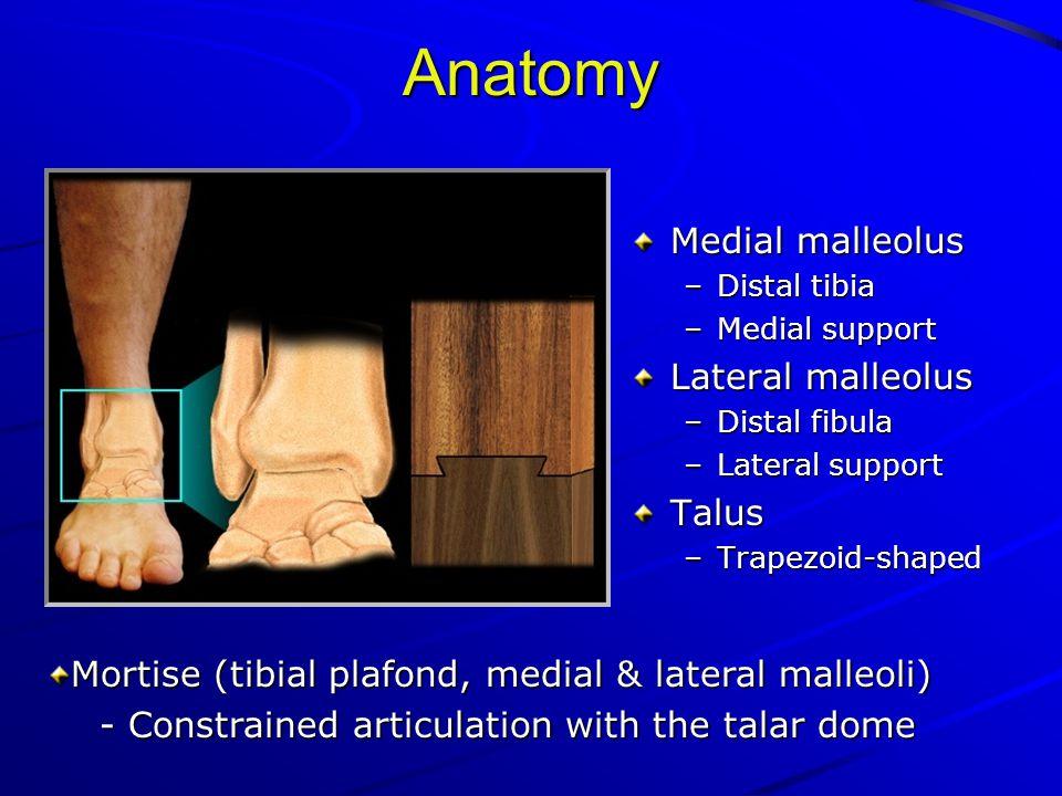 Anatomy Medial malleolus Lateral malleolus Talus