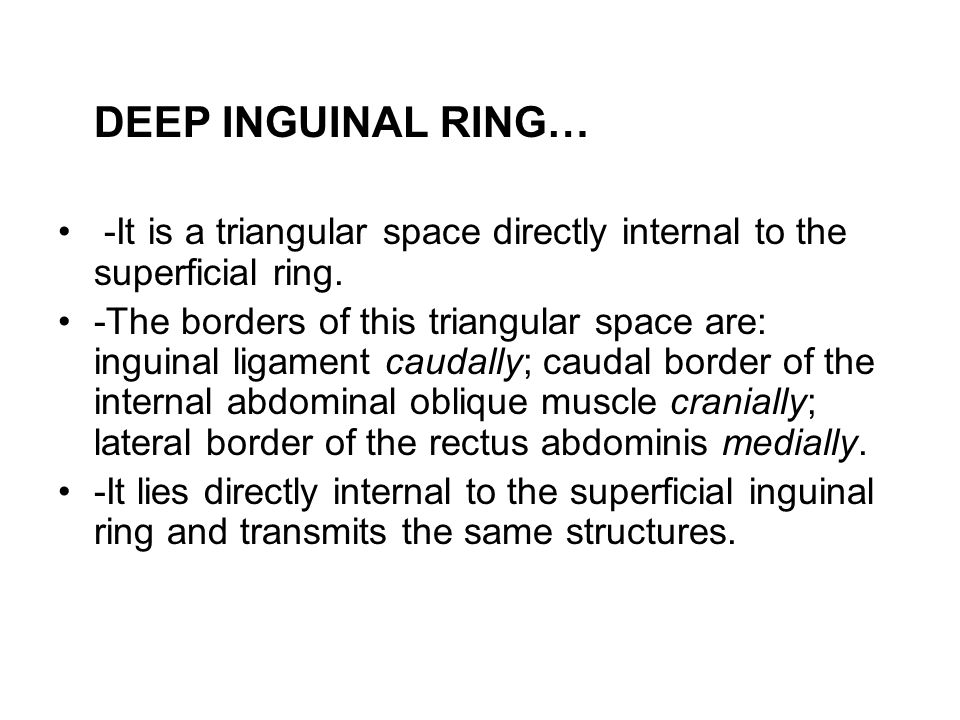 DEEP INGUINAL RING… -It is a triangular space directly internal to the superficial ring.