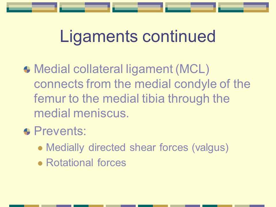 Ligaments continued Medial collateral ligament (MCL) connects from the medial condyle of the femur to the medial tibia through the medial meniscus.