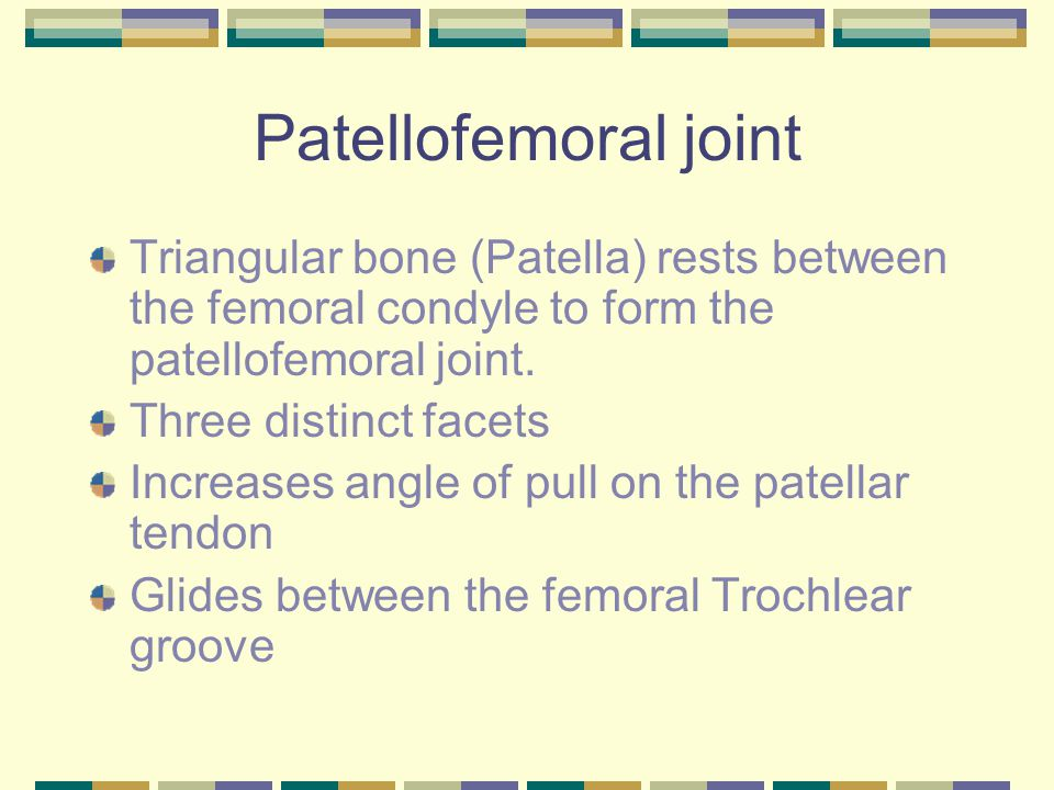 Patellofemoral joint Triangular bone (Patella) rests between the femoral condyle to form the patellofemoral joint.