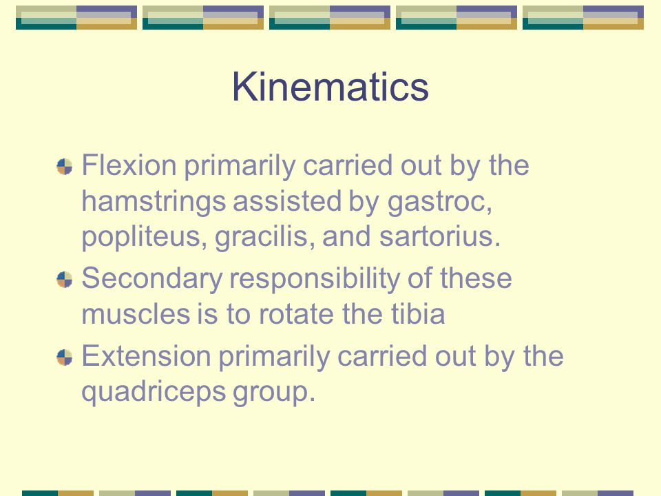 Kinematics Flexion primarily carried out by the hamstrings assisted by gastroc, popliteus, gracilis, and sartorius.