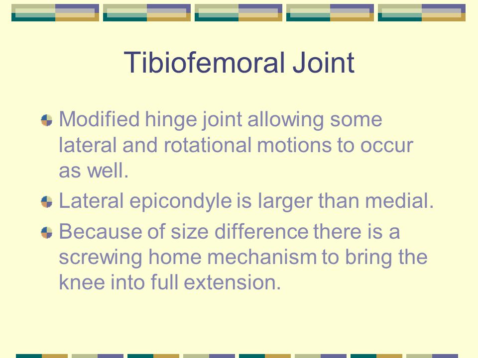 Tibiofemoral Joint Modified hinge joint allowing some lateral and rotational motions to occur as well.