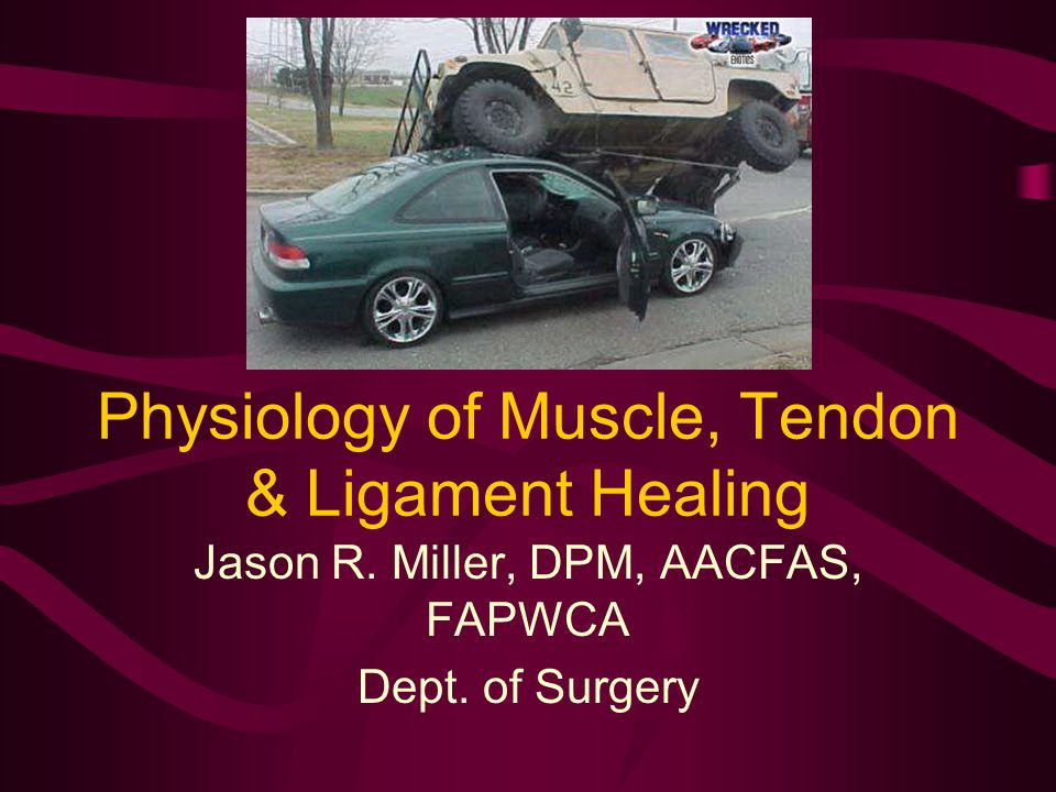 Physiology of Muscle, Tendon & Ligament Healing