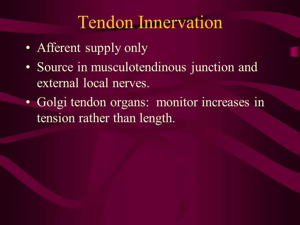 Tendon Innervation Afferent supply only