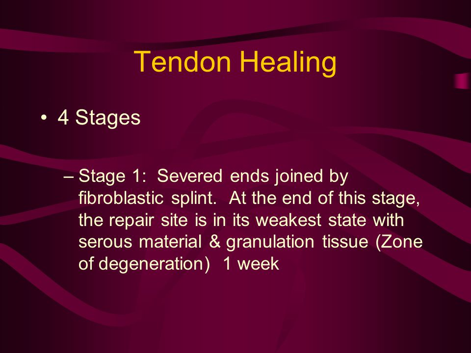 Tendon Healing 4 Stages.