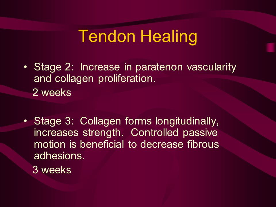 Tendon Healing Stage 2: Increase in paratenon vascularity and collagen proliferation. 2 weeks.