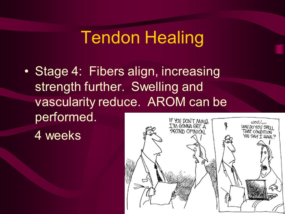 Tendon Healing Stage 4: Fibers align, increasing strength further. Swelling and vascularity reduce. AROM can be performed.