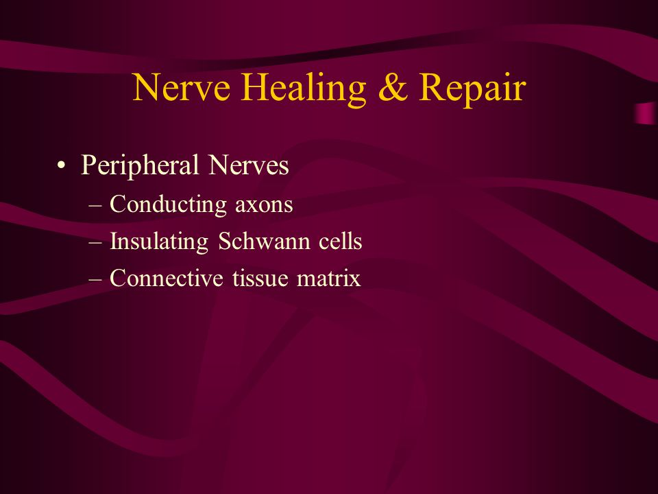 Nerve Healing & Repair Peripheral Nerves Conducting axons