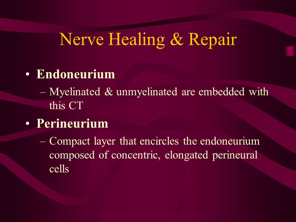 Nerve Healing & Repair Endoneurium Perineurium