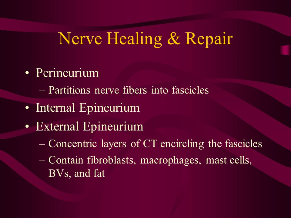 Nerve Healing & Repair Perineurium Internal Epineurium
