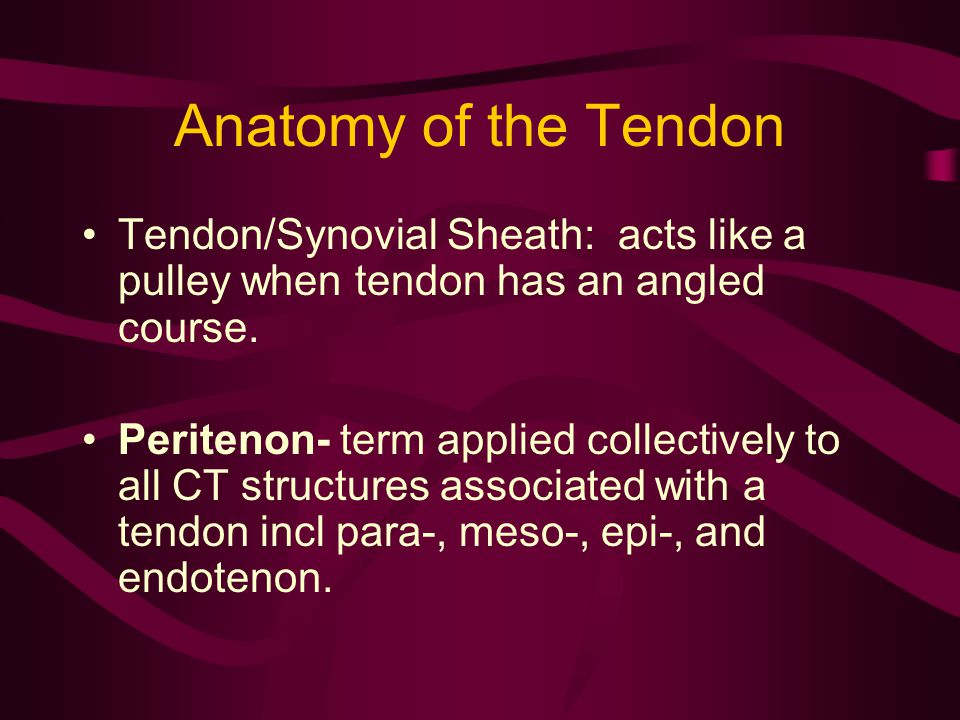 Anatomy of the Tendon Tendon/Synovial Sheath: acts like a pulley when tendon has an angled course.