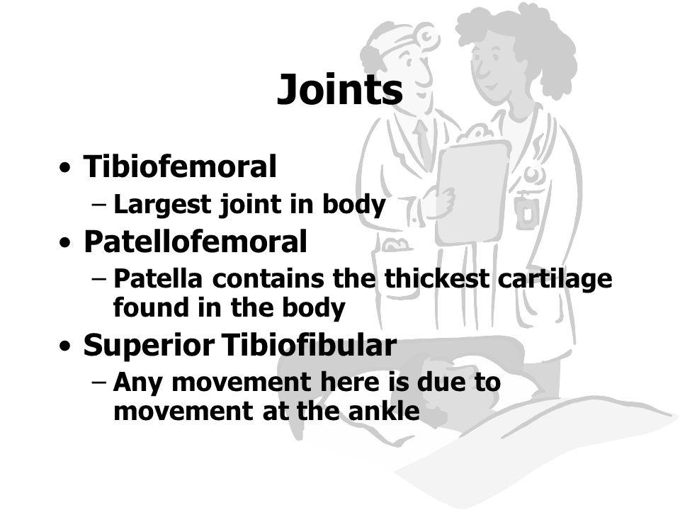 Joints Tibiofemoral Patellofemoral Superior Tibiofibular
