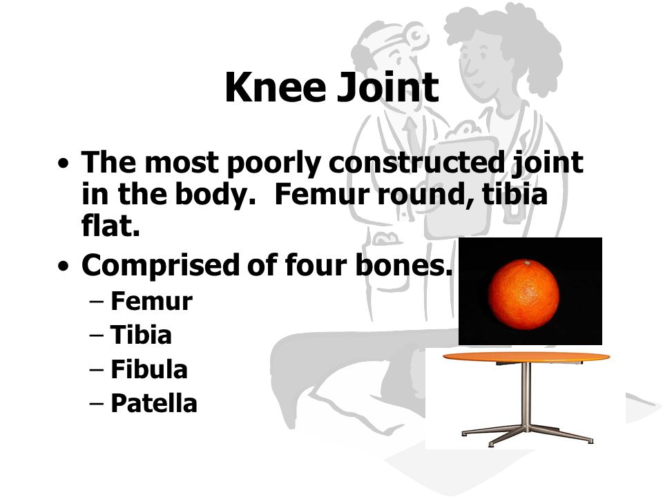Knee Joint The most poorly constructed joint in the body. Femur round, tibia flat. Comprised of four bones.