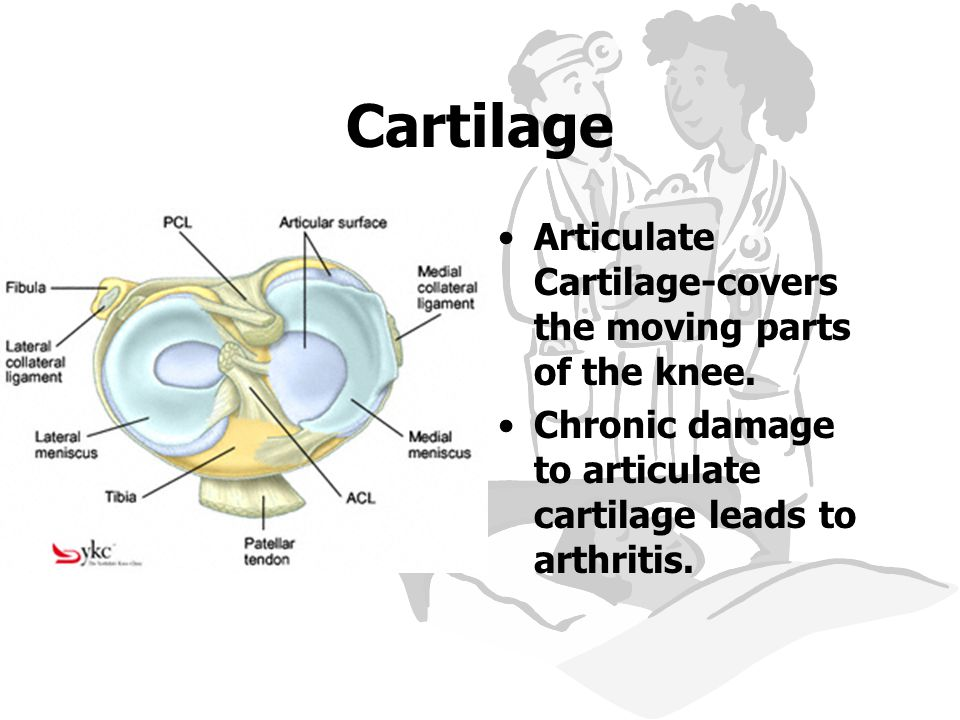 Cartilage Articulate Cartilage-covers the moving parts of the knee.
