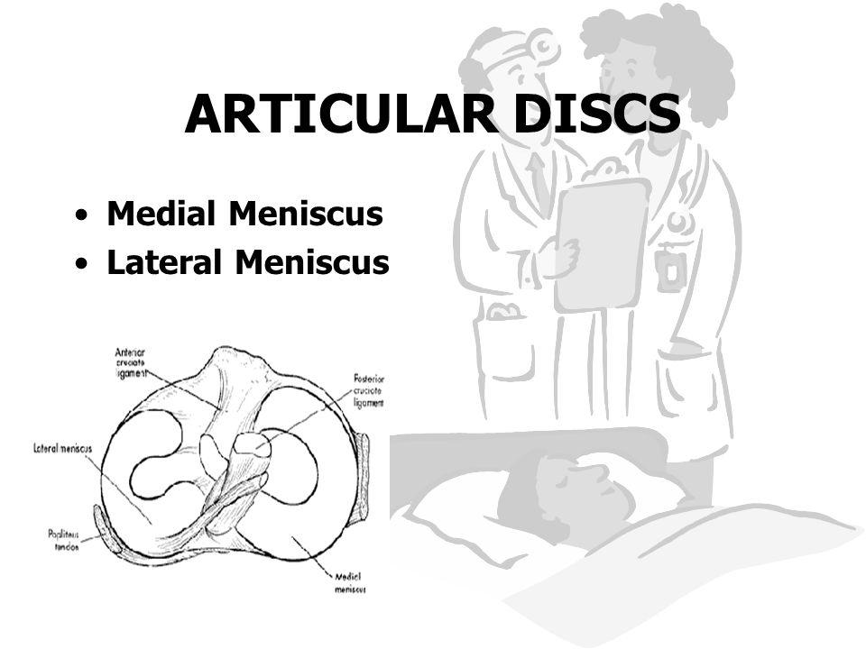 ARTICULAR DISCS Medial Meniscus Lateral Meniscus