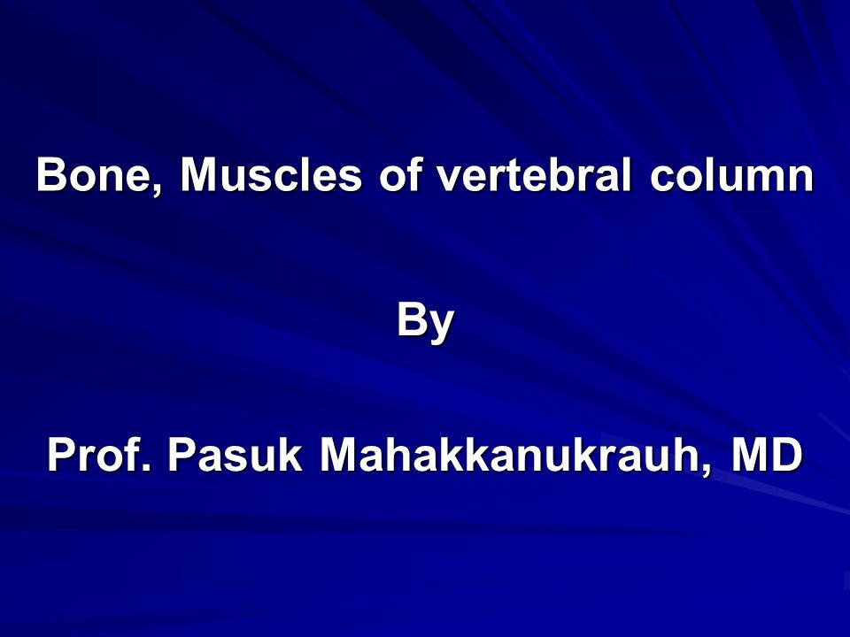 Bone, Muscles of vertebral column