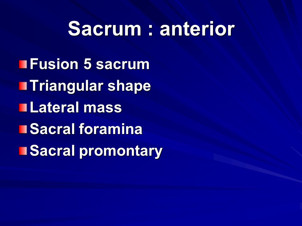 Sacrum : anterior Fusion 5 sacrum Triangular shape Lateral mass
