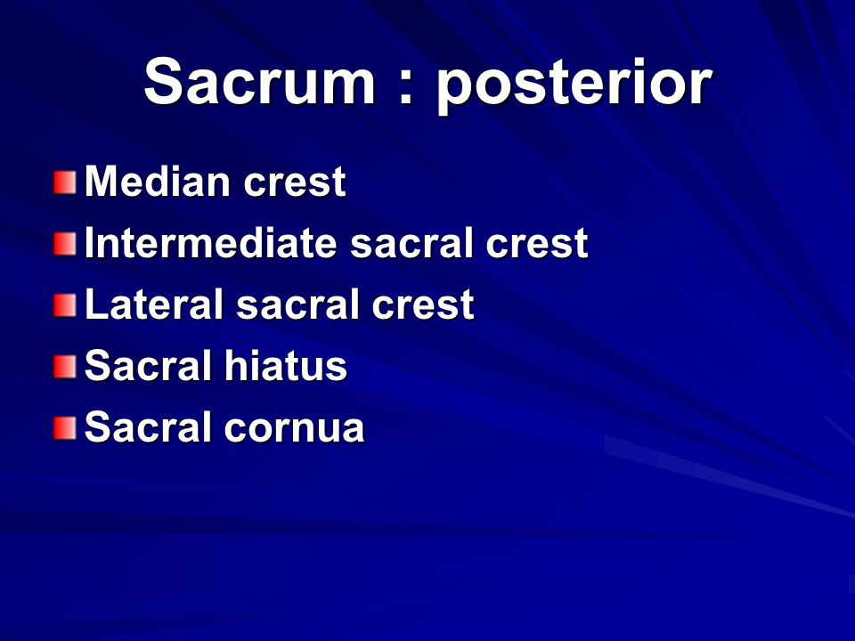 Sacrum : posterior Median crest Intermediate sacral crest