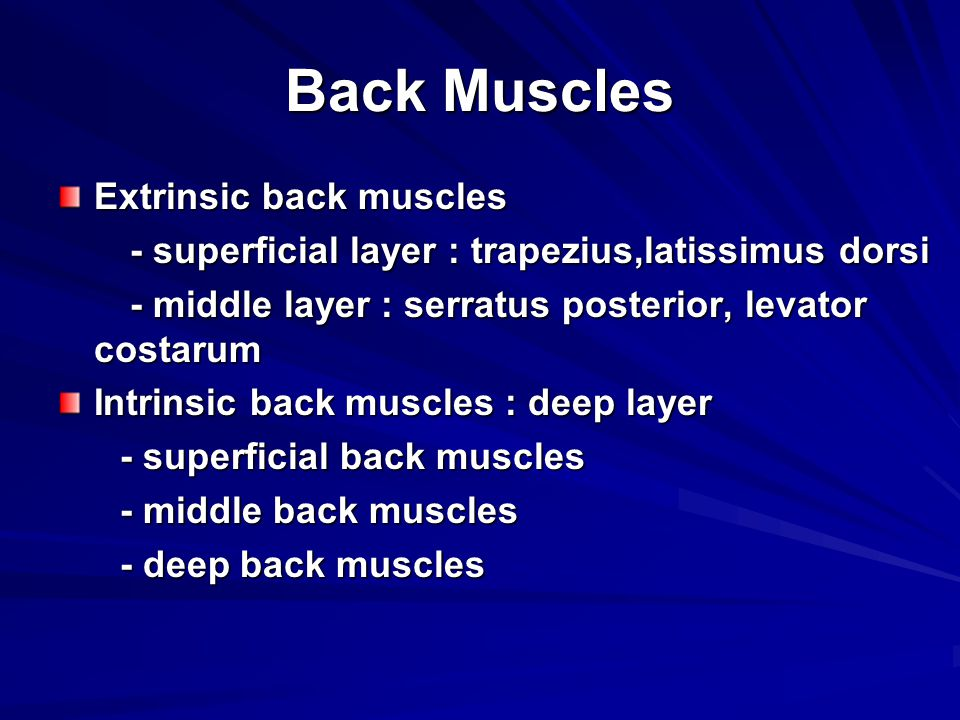 Back Muscles Extrinsic back muscles