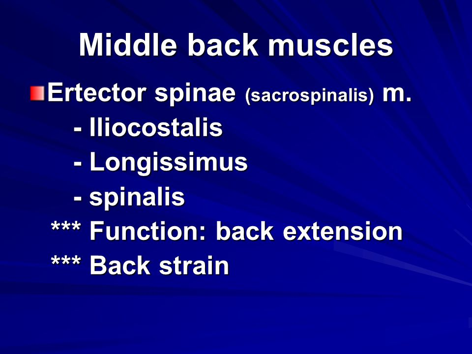 Middle back muscles Ertector spinae (sacrospinalis) m. - Iliocostalis