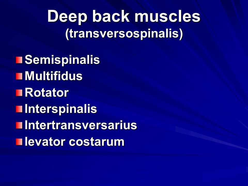 Deep back muscles (transversospinalis)