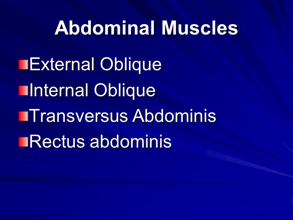 Abdominal Muscles External Oblique Internal Oblique